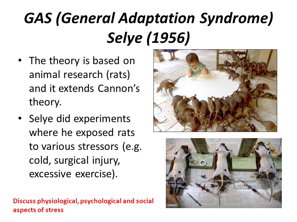 GAS (General Adaptation Syndrome) Selye (1956) The theory is based on animal research (rats) and it extends Cannon's theory. Selye did experiments whe