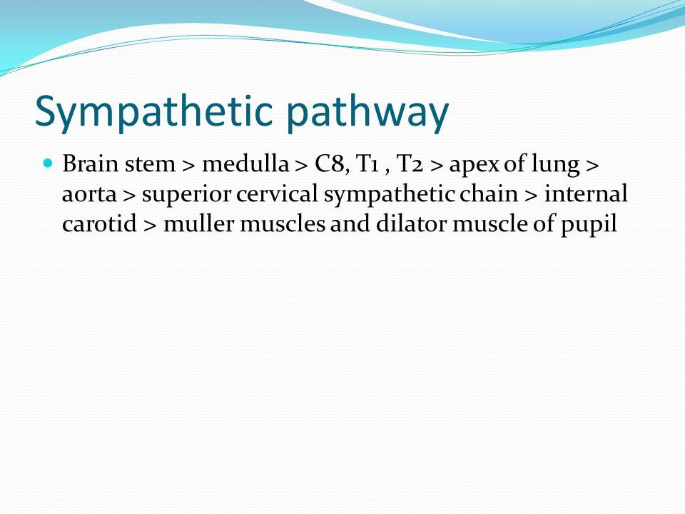 Parasympathetic pathway Pupillomotor nerves > brain stem sublentiform nucleus > edinger westphal nucleuses> 3th N nasocilliary > ciliary ganglion > sphincter muscles of iris