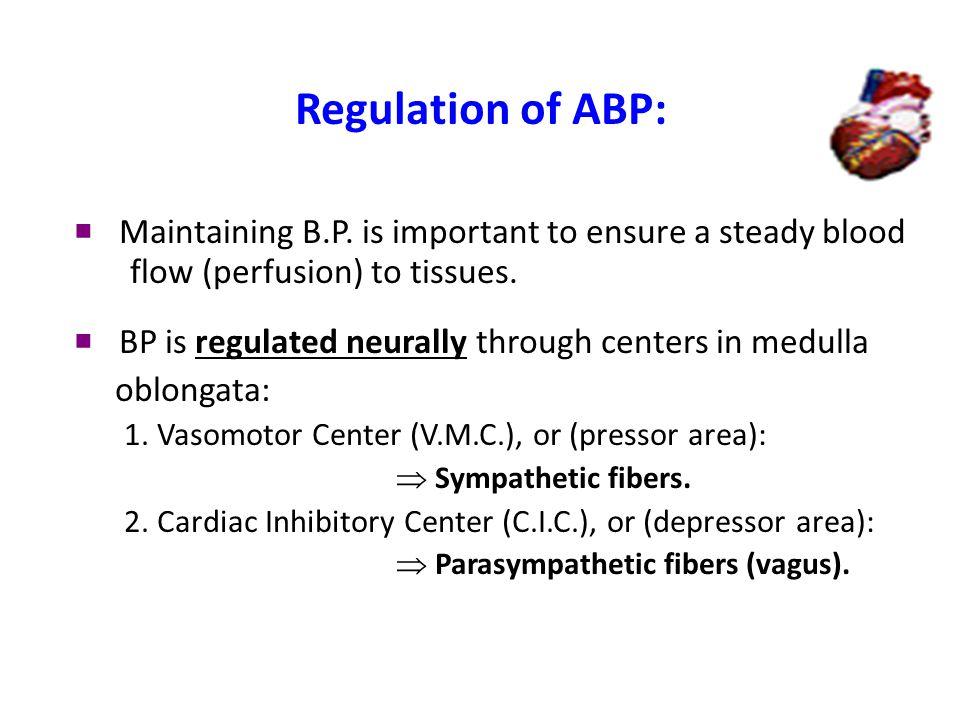 cardiac control centers in medulla oblongata Regulation of ABP (continued) 1.