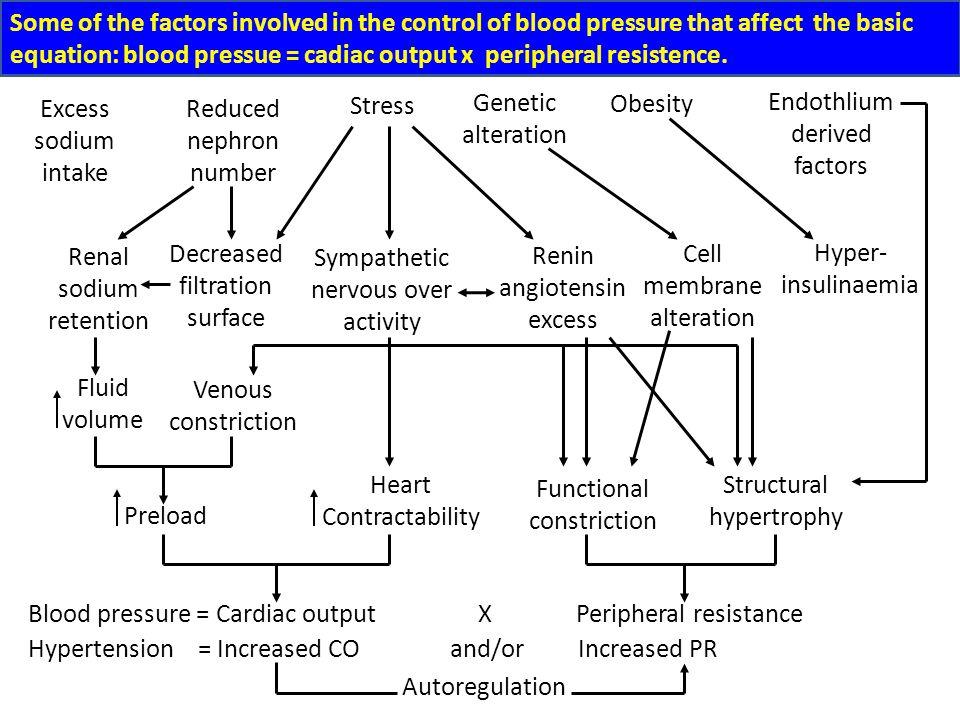 Regulation of Arterial Blood Pressure C. Regulation of Blood Volume