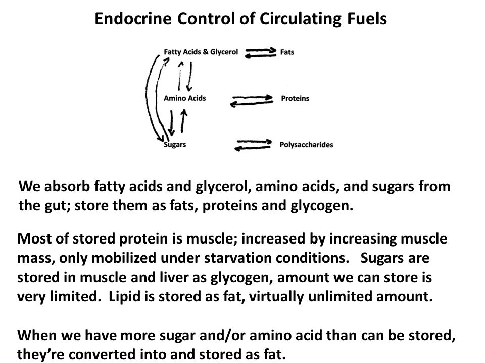 Endocrine Control of Circulating Fuels Most of stored protein is muscle; increased by increasing muscle mass, only mobilized under starvation conditions.