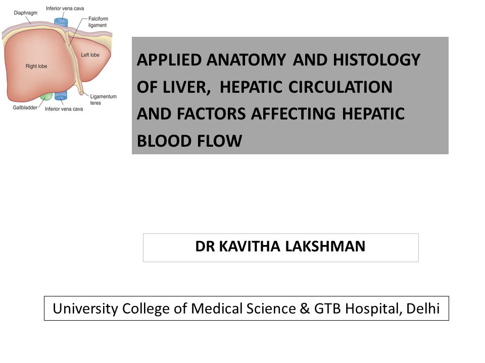DR KAVITHA LAKSHMAN APPLIED ANATOMY AND HISTOLOGY OF LIVER, HEPATIC CIRCULATION AND FACTORS AFFECTING HEPATIC BLOOD FLOW University College of Medical