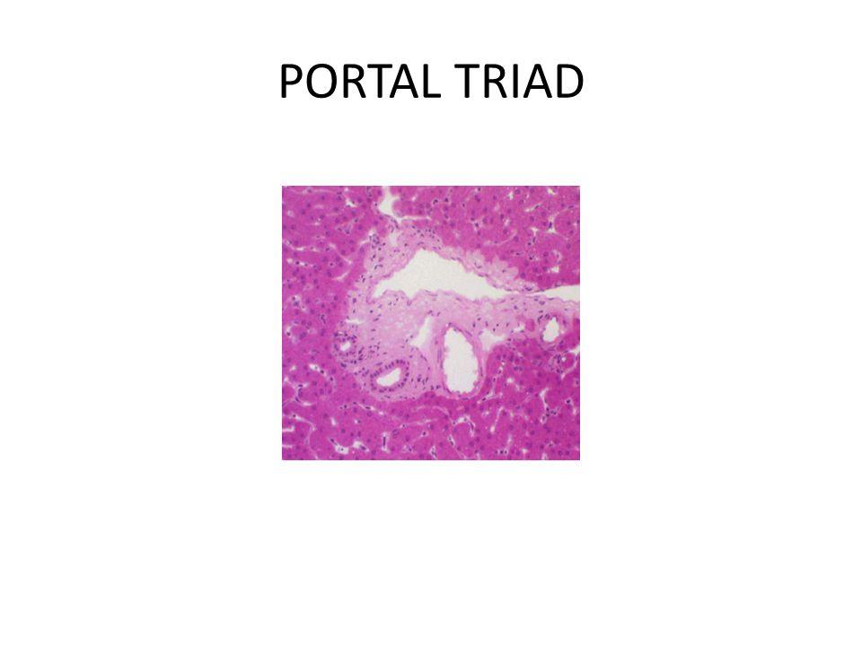 PORTAL TRIAD
