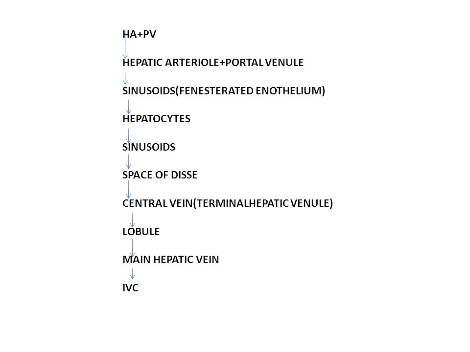 HA+PV HEPATIC ARTERIOLE+PORTAL VENULE SINUSOIDS(FENESTERATED ENOTHELIUM) HEPATOCYTES SINUSOIDS SPACE OF DISSE CENTRAL VEIN(TERMINALHEPATIC VENULE) LOBULE MAIN HEPATIC VEIN IVC