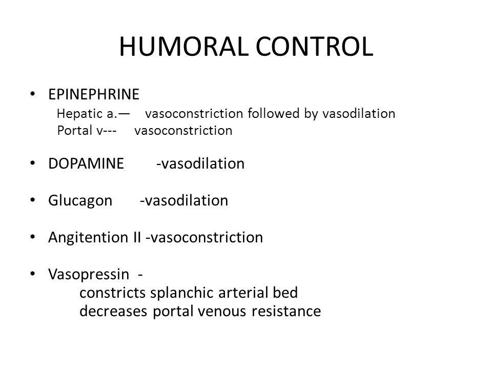 HUMORAL CONTROL EPINEPHRINE Hepatic a.— vasoconstriction followed by vasodilation Portal v--- vasoconstriction DOPAMINE -vasodilation Glucagon -vasodilation Angitention II -vasoconstriction Vasopressin - constricts splanchic arterial bed decreases portal venous resistance