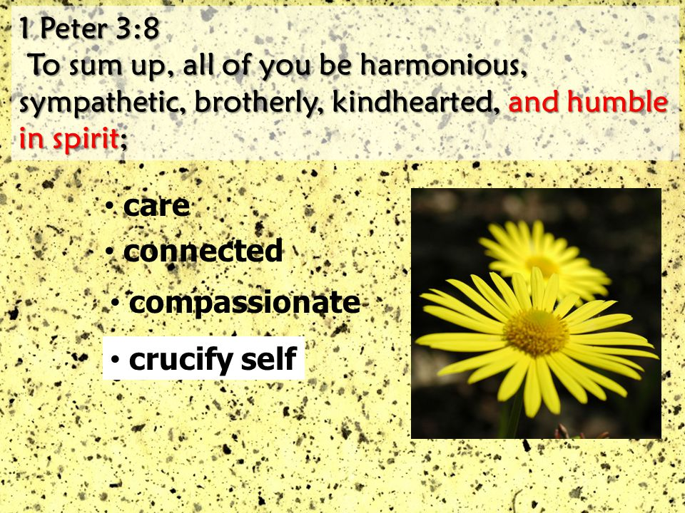 1 Peter 3:8 1 Peter 3:8 To sum up, all of you be harmonious, sympathetic, brotherly, kindhearted, and humble in spirit; To sum up, all of you be harmonious, sympathetic, brotherly, kindhearted, and humble in spirit; care connected compassionate crucify self