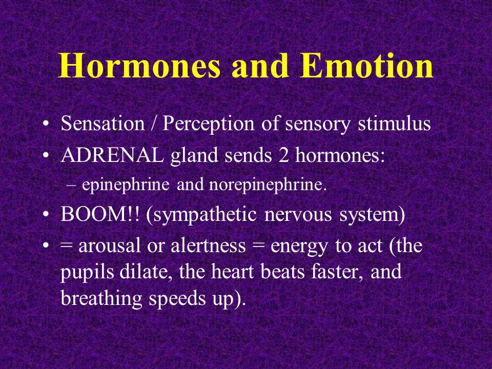 Hormones and Emotion Sensation / Perception of sensory stimulus ADRENAL gland sends 2 hormones: –epinephrine and norepinephrine. BOOM!! (sympathetic n