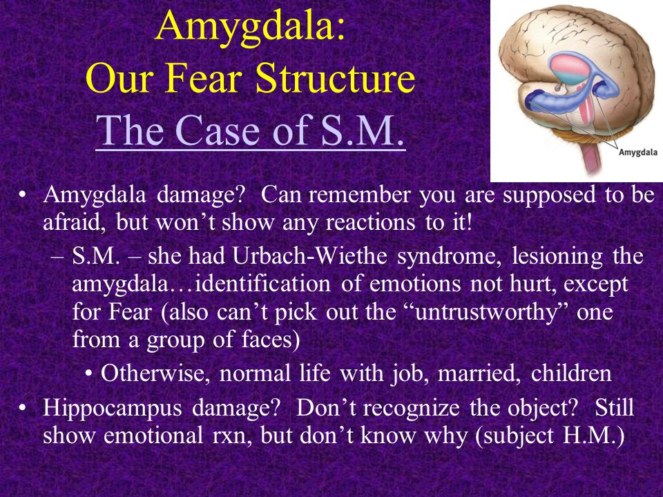 Amygdala: Our Fear Structure The Case of S.M. The Case of S.M. Amygdala damage? Can remember you are supposed to be afraid, but won't show any reactio
