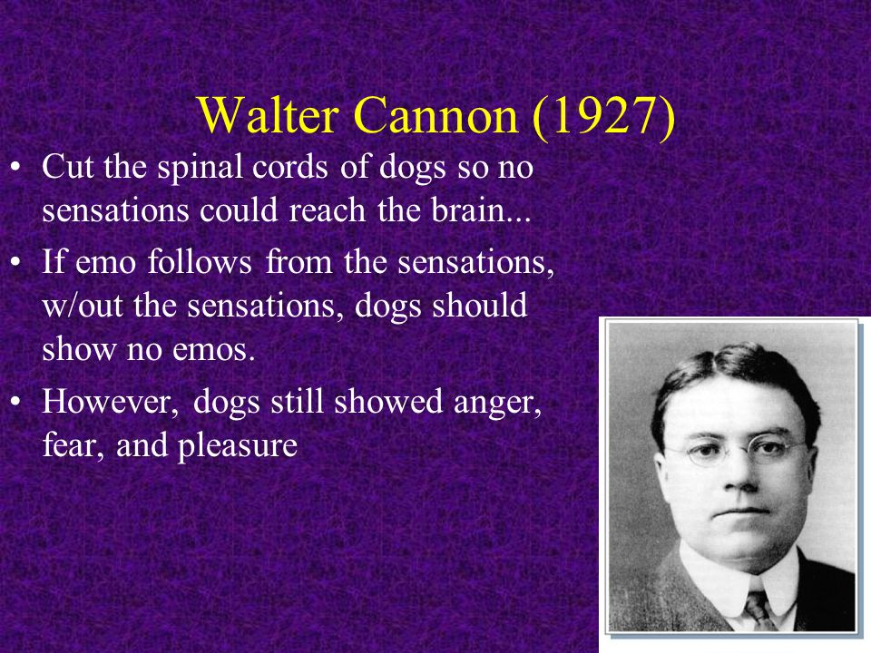 Walter Cannon (1927) Cut the spinal cords of dogs so no sensations could reach the brain... If emo follows from the sensations, w/out the sensations,