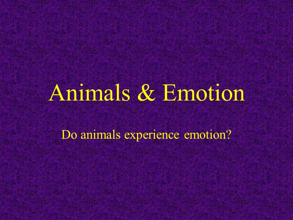 Animals & Emotion Do animals experience emotion?
