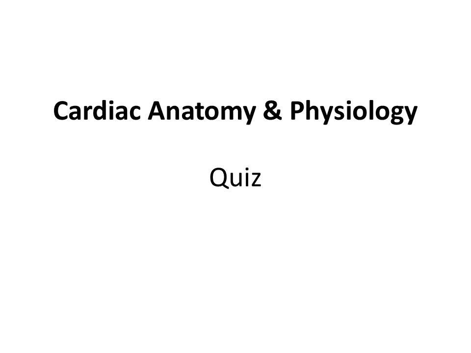 Cardiac Anatomy & Physiology Quiz