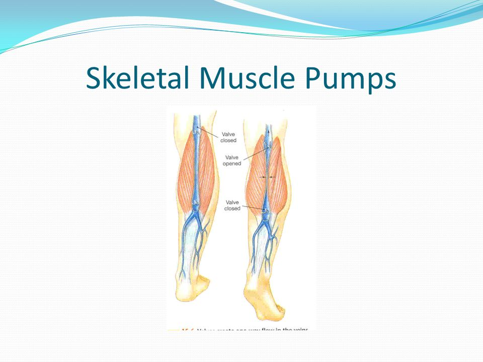 Skeletal Muscle Pumps