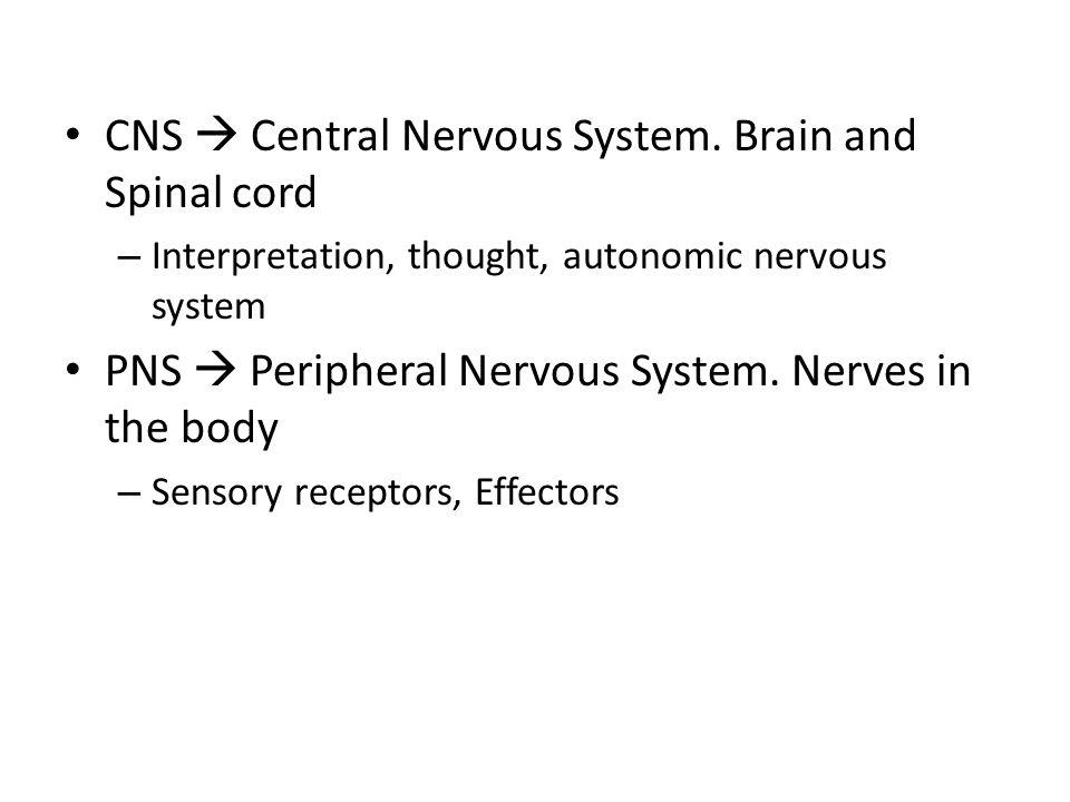 CNS  Central Nervous System.
