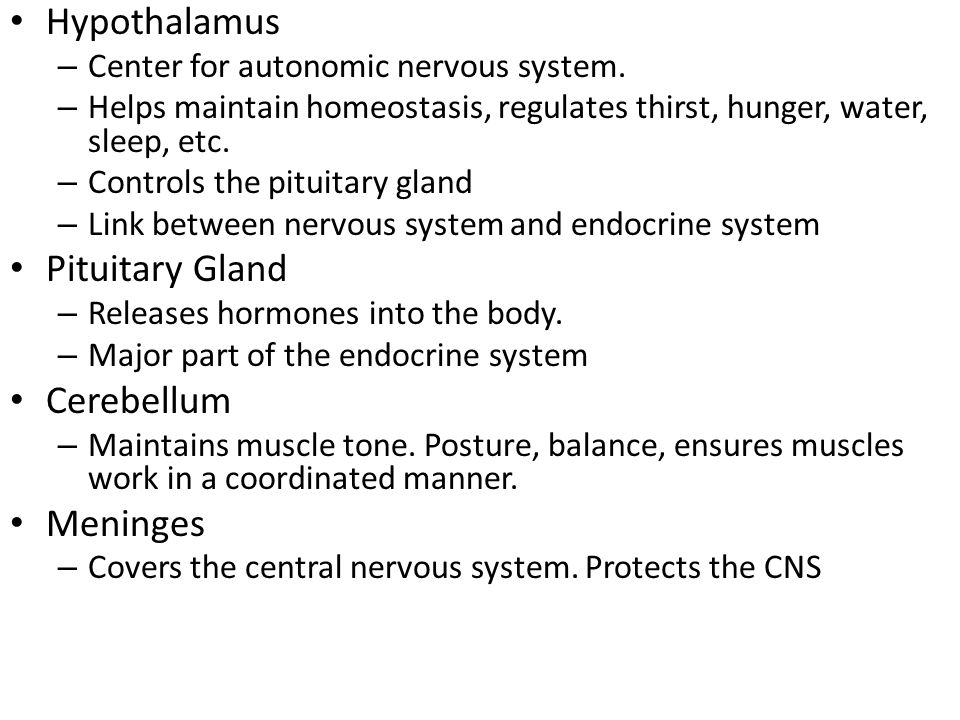 Hypothalamus – Center for autonomic nervous system. – Helps maintain homeostasis, regulates thirst, hunger, water, sleep, etc. – Controls the pituitar