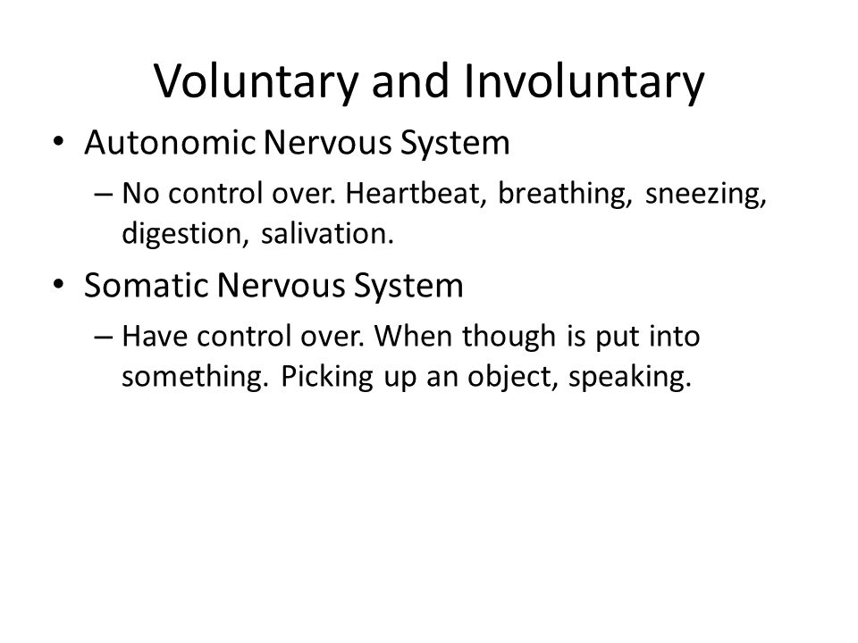 Voluntary and Involuntary Autonomic Nervous System – No control over. Heartbeat, breathing, sneezing, digestion, salivation. Somatic Nervous System –