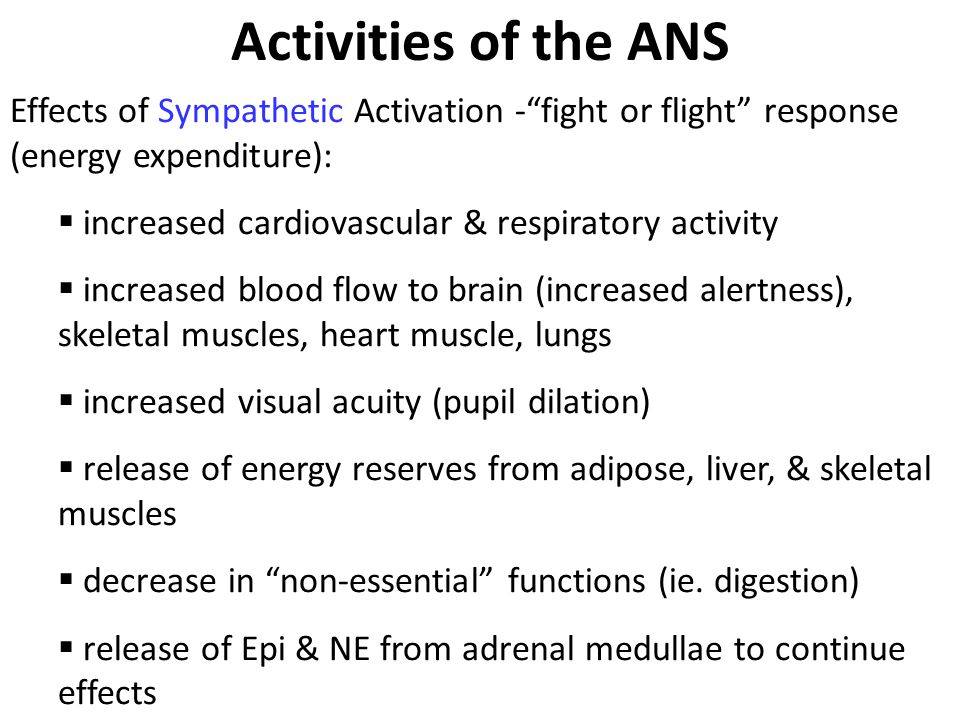 Activities of the ANS Effects of Sympathetic Activation - fight or flight response (energy expenditure):  increased cardiovascular & respiratory activity  increased blood flow to brain (increased alertness), skeletal muscles, heart muscle, lungs  increased visual acuity (pupil dilation)  release of energy reserves from adipose, liver, & skeletal muscles  decrease in non-essential functions (ie.