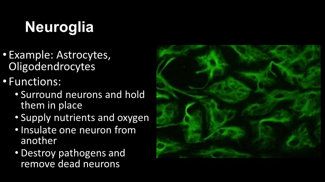 Types of Neurons Sensory (afferent) Transmits signals from sensory receptors to the spinal cord/brain.