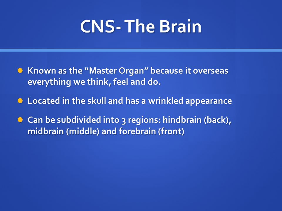 CNS- Spinal Cord The body's information highway.The body's information highway.