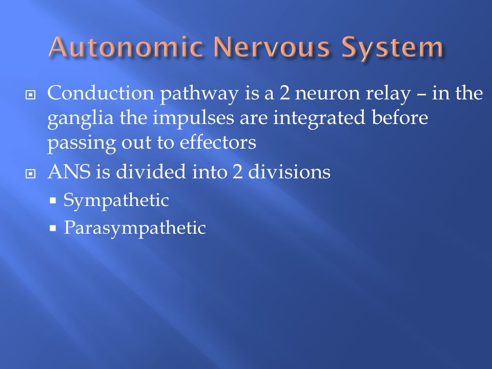 Conduction pathway is a 2 neuron relay – in the ganglia the impulses are integrated before passing out to effectors  ANS is divided into 2 division