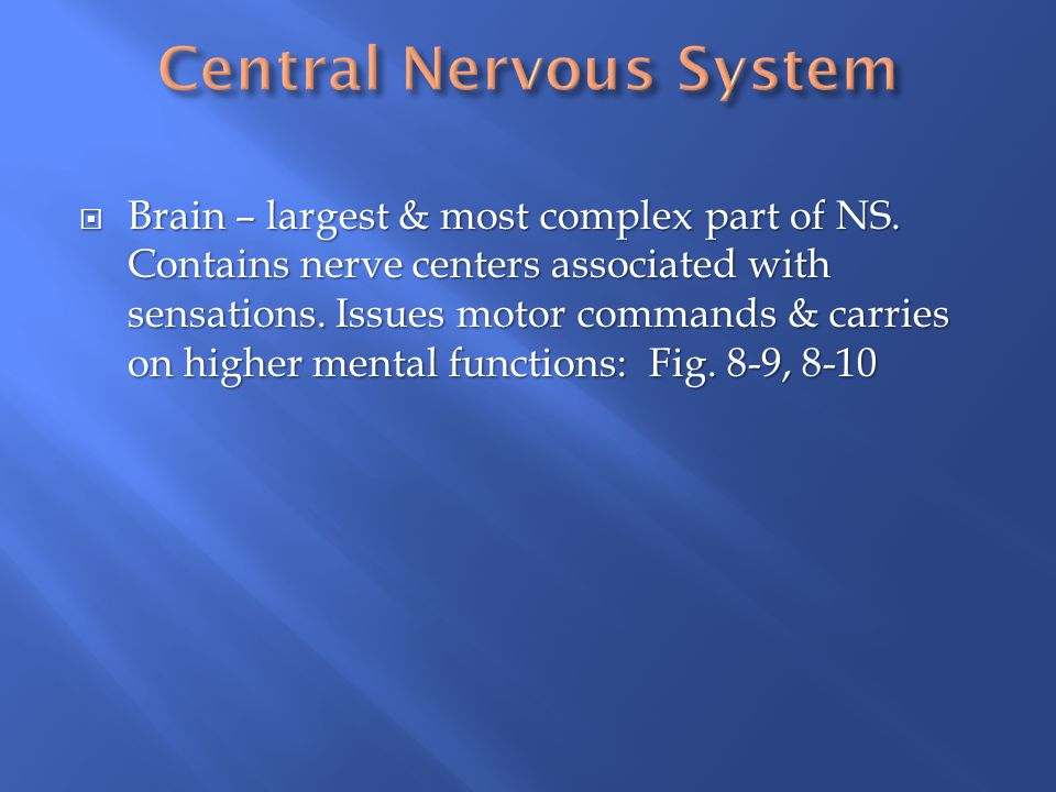  Brain – largest & most complex part of NS. Contains nerve centers associated with sensations. Issues motor commands & carries on higher mental funct