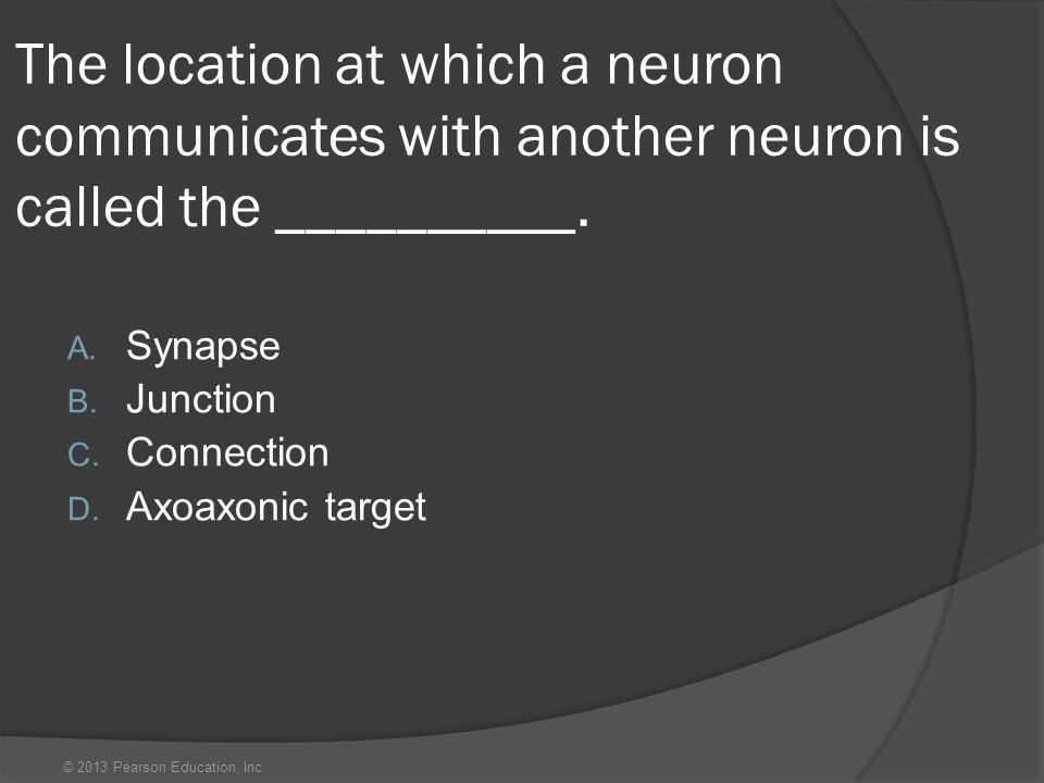 © 2013 Pearson Education, Inc. The location at which a neuron communicates with another neuron is called the __________. A. Synapse B. Junction C. Con