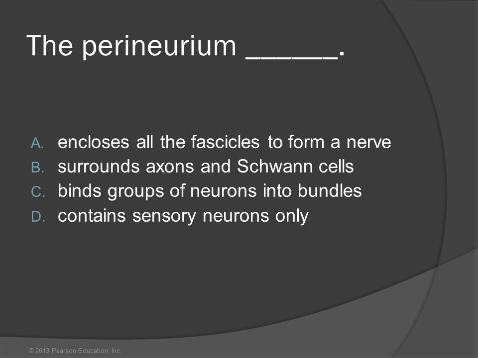 © 2013 Pearson Education, Inc. The perineurium ______. A. encloses all the fascicles to form a nerve B. surrounds axons and Schwann cells C. binds gro