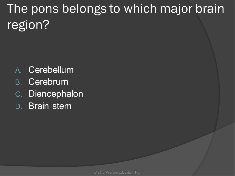 The ______ of the brain is the location of our conscious mind.