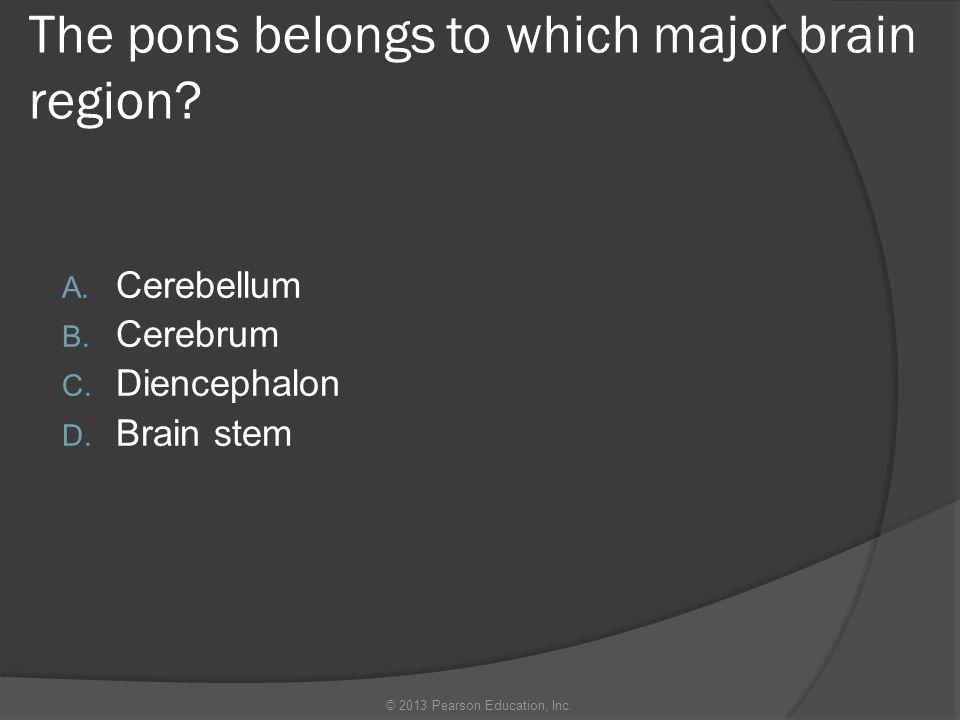 The pons belongs to which major brain region? A. Cerebellum B. Cerebrum C. Diencephalon D. Brain stem © 2013 Pearson Education, Inc.