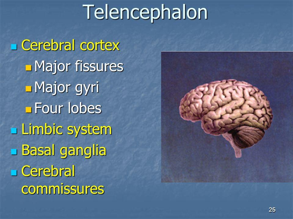 25 Cerebral cortex Cerebral cortex Major fissures Major fissures Major gyri Major gyri Four lobes Four lobes Limbic system Limbic system Basal ganglia
