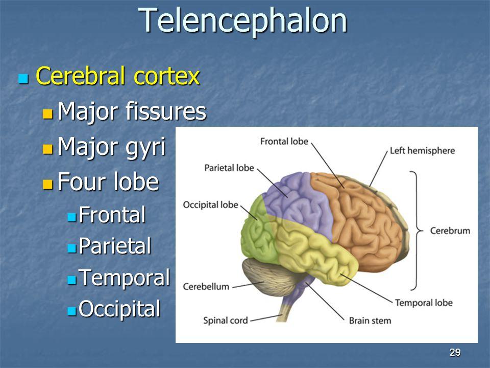 29 Cerebral cortex Cerebral cortex Major fissures Major fissures Major gyri Major gyri Four lobe Four lobe Frontal Frontal Parietal Parietal Temporal