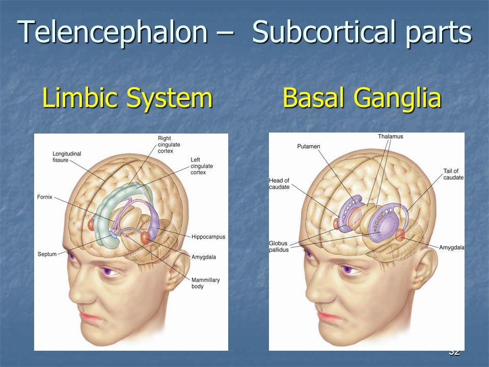 32 Limbic System Telencephalon – Subcortical parts Basal Ganglia