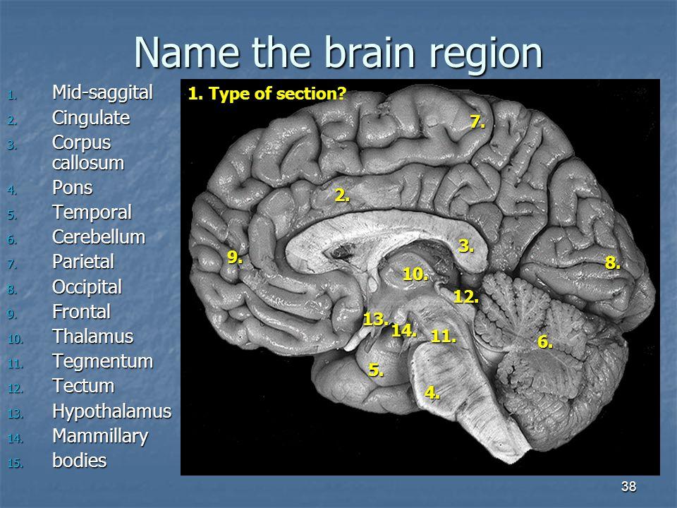 38 Name the brain region 1. Mid-saggital 2. Cingulate 3. Corpus callosum 4. Pons 5. Temporal 6. Cerebellum 7. Parietal 8. Occipital 9. Frontal 10. Tha