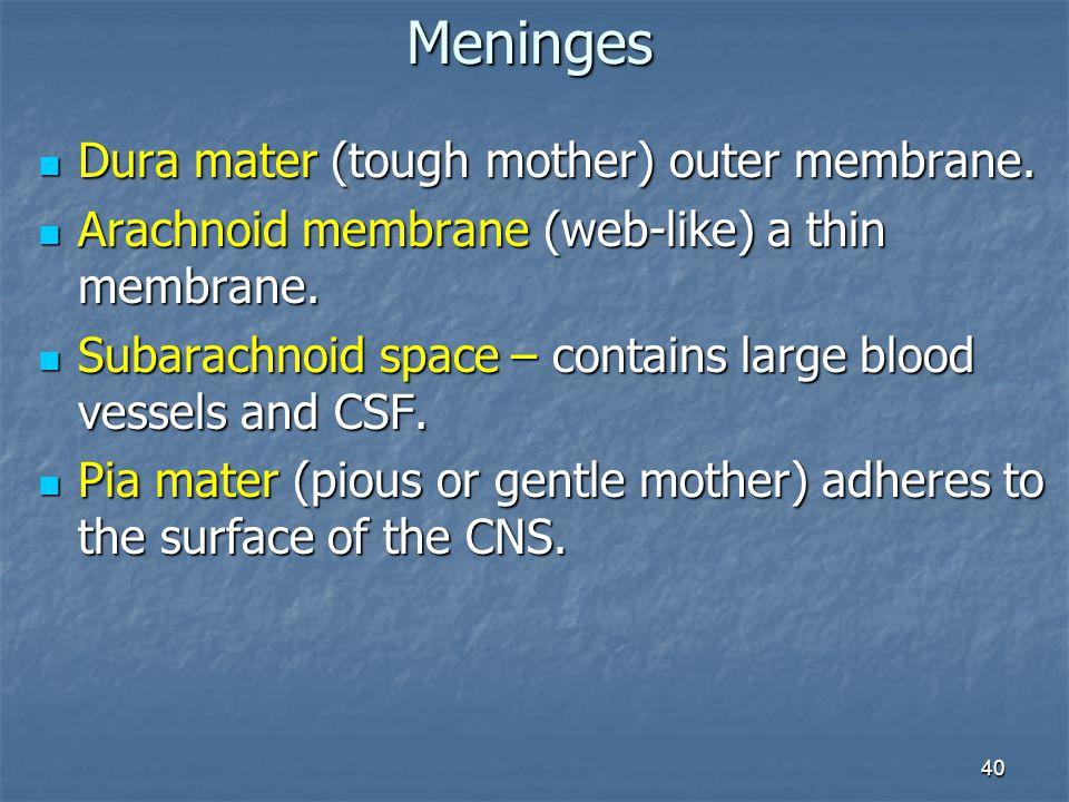 40 Dura mater (tough mother) outer membrane. Dura mater (tough mother) outer membrane. Arachnoid membrane (web-like) a thin membrane. Arachnoid membra