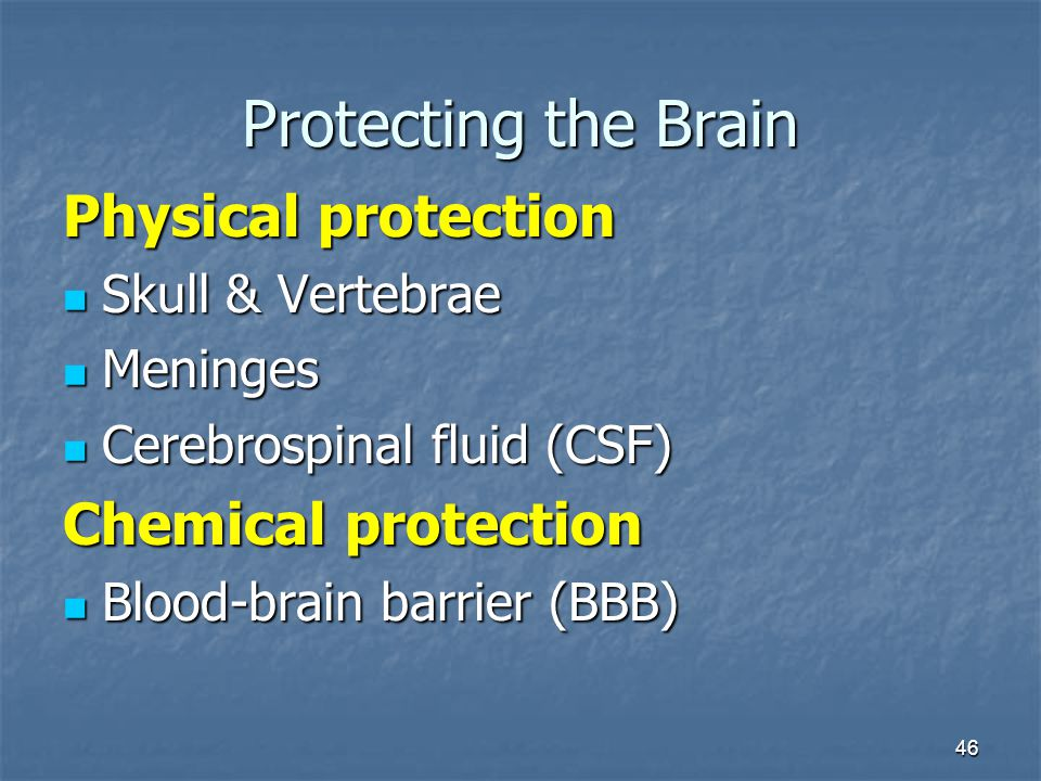 46 Protecting the Brain Physical protection Skull & Vertebrae Skull & Vertebrae Meninges Meninges Cerebrospinal fluid (CSF) Cerebrospinal fluid (CSF) Chemical protection Blood-brain barrier (BBB) Blood-brain barrier (BBB)
