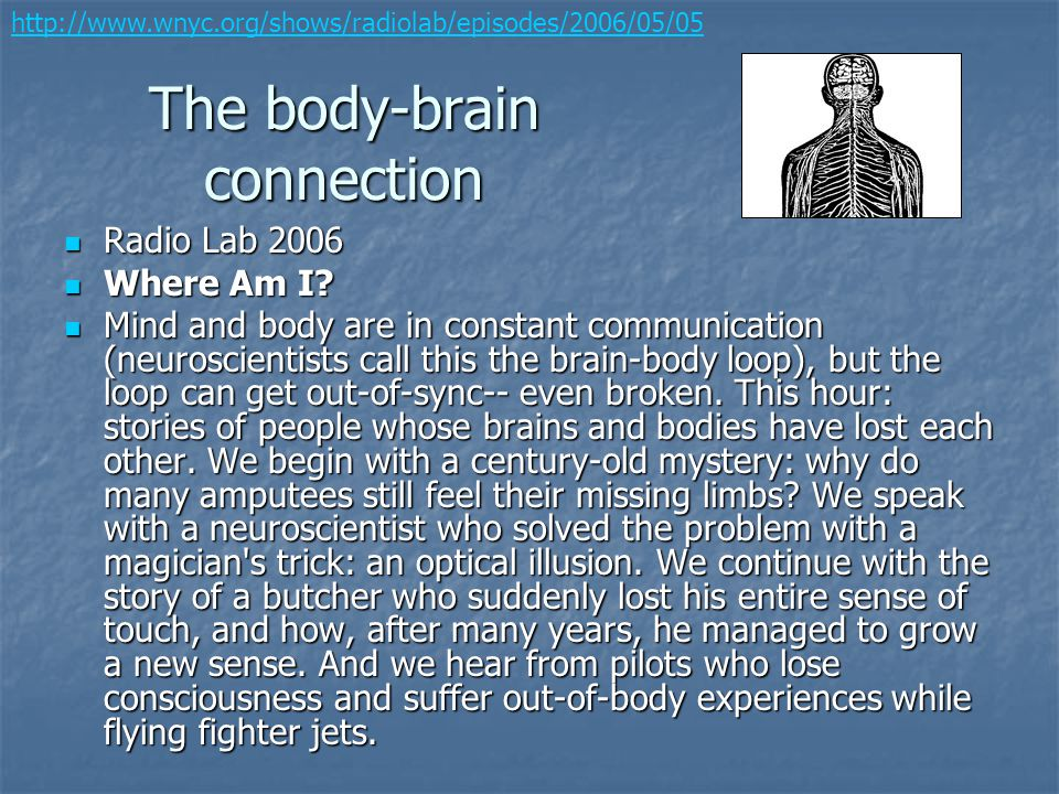 The body-brain connection Radio Lab 2006 Radio Lab 2006 Where Am I? Where Am I? Mind and body are in constant communication (neuroscientists call this