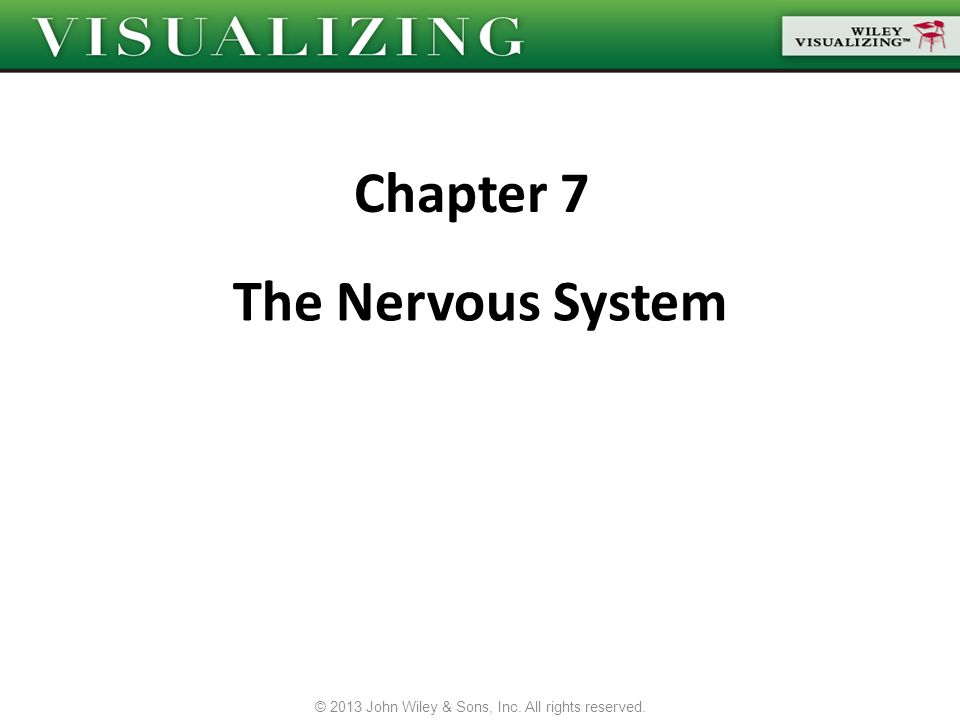 The Nervous System Chapter 7 © 2013 John Wiley & Sons, Inc. All rights reserved.