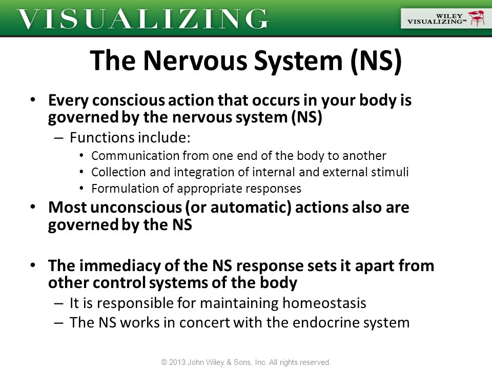Every conscious action that occurs in your body is governed by the nervous system (NS) – Functions include: Communication from one end of the body to
