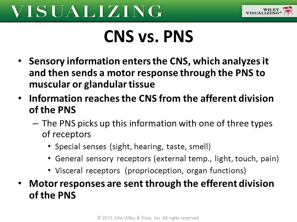 Sensory information enters the CNS, which analyzes it and then sends a motor response through the PNS to muscular or glandular tissue Information reac