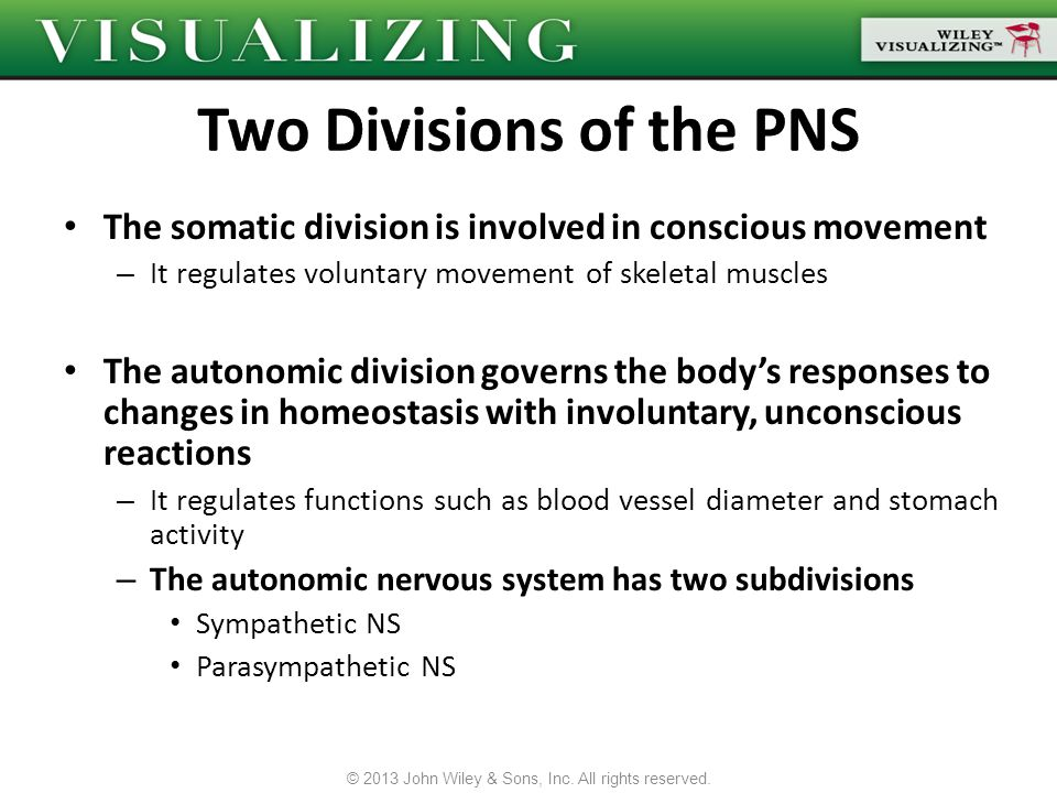 Sympathetic NS – Includes nerves that control the body when it is actively moving and burning energy Fight or flight responses – Nerves in the thoracic and lumbar regions of the spinal cord Parasympathetic NS – Includes nerves responsible for digestion, energy storage and relaxation Rest and digest responses – Nerves in the cranial and sacral regions of the spinal cord Most body organs are innervated by both the Sympathetic NS and Parasympathetic NS – To maintain homeostasis © 2013 John Wiley & Sons, Inc.