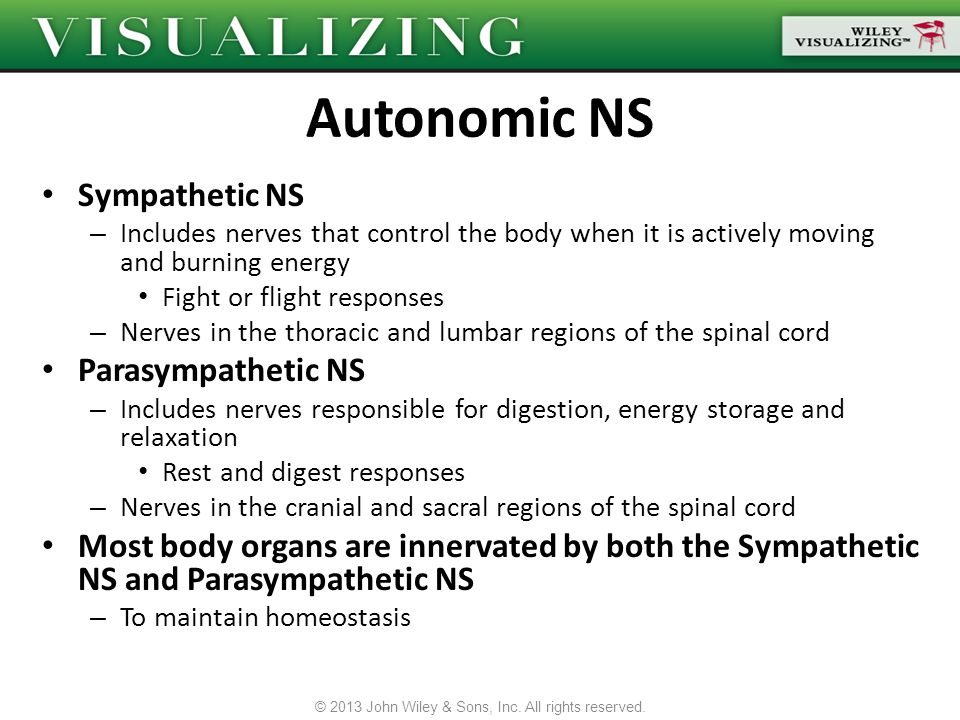 Sympathetic NS – Includes nerves that control the body when it is actively moving and burning energy Fight or flight responses – Nerves in the thoraci