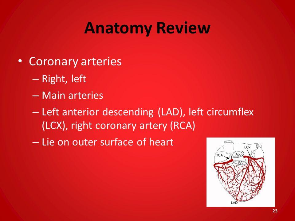 Anatomy Review Coronary arteries – Right, left – Main arteries – Left anterior descending (LAD), left circumflex (LCX), right coronary artery (RCA) –