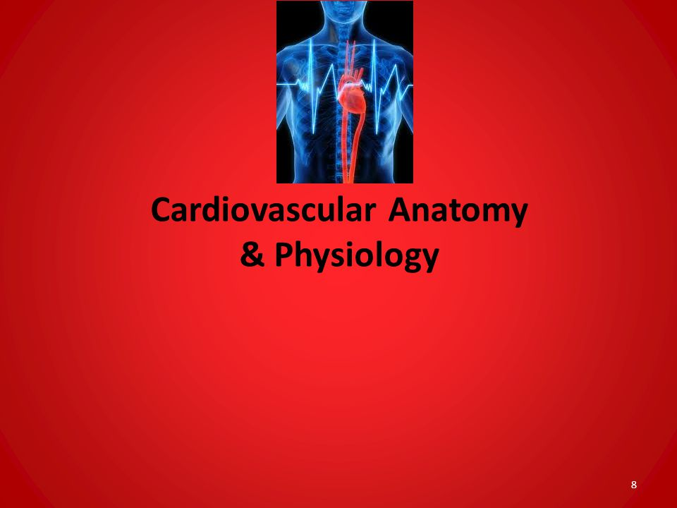 Cardiovascular Anatomy & Physiology 8