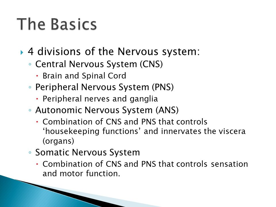  4 divisions of the Nervous system: ◦ Central Nervous System (CNS)  Brain and Spinal Cord ◦ Peripheral Nervous System (PNS)  Peripheral nerves and ganglia ◦ Autonomic Nervous System (ANS)  Combination of CNS and PNS that controls 'housekeeping functions' and innervates the viscera (organs) ◦ Somatic Nervous System  Combination of CNS and PNS that controls sensation and motor function.