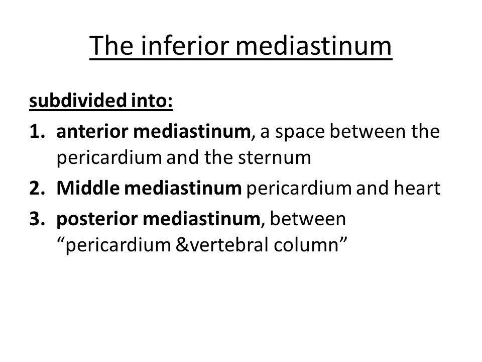 The inferior mediastinum subdivided into: 1.anterior mediastinum, a space between the pericardium and the sternum 2.Middle mediastinum pericardium and