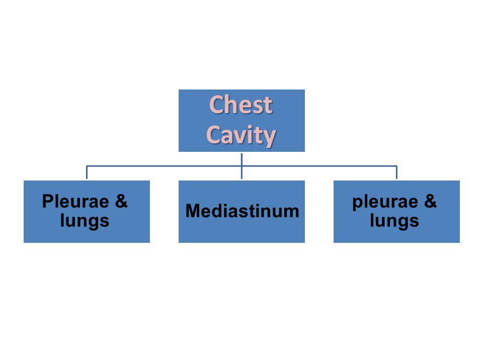 Chest Cavity Pleurae & lungs Mediastinum pleurae & lungs