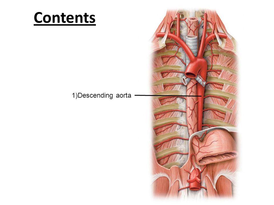 Contents 1)Descending aorta
