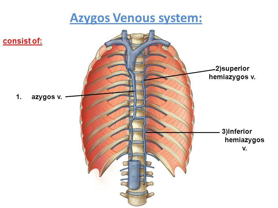 Azygos Venous system: consist of: 1.azygos v. 3)Inferior hemiazygos v. 2)superior hemiazygos v.
