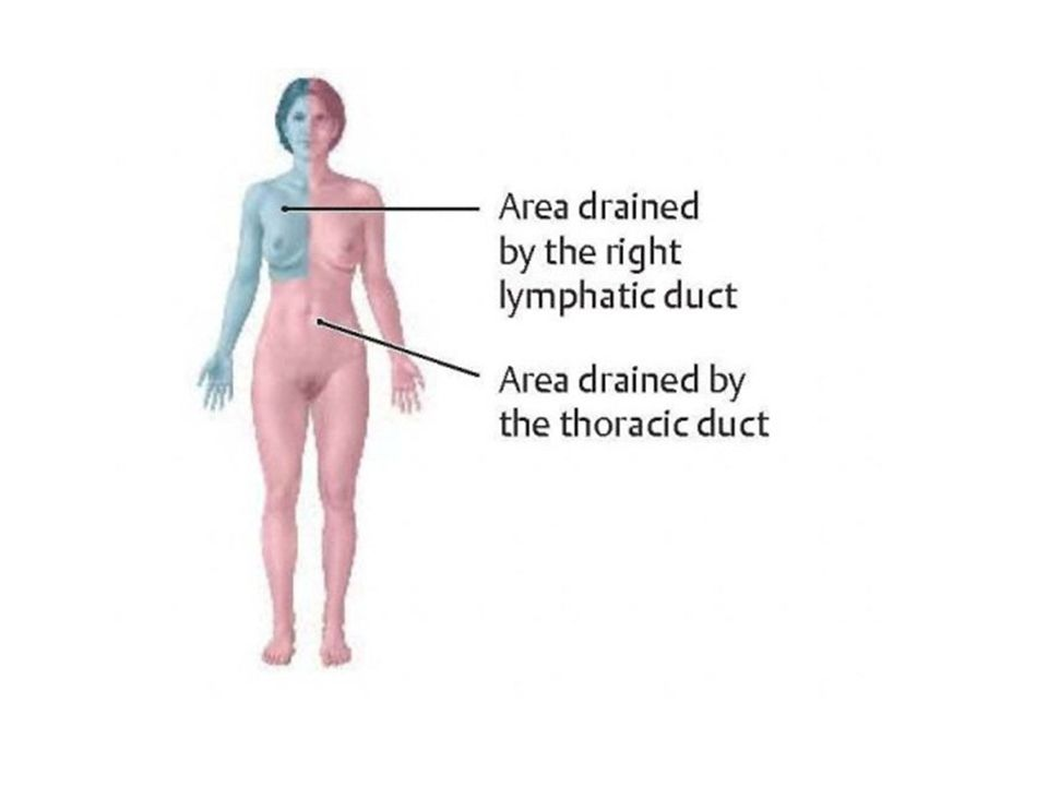 Right Lymphatic Duct formed by: It opens into beginning Right brachiocephalic vein.