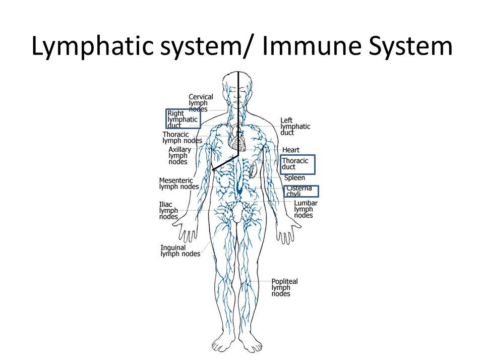 Lymphatic system/ Immune System