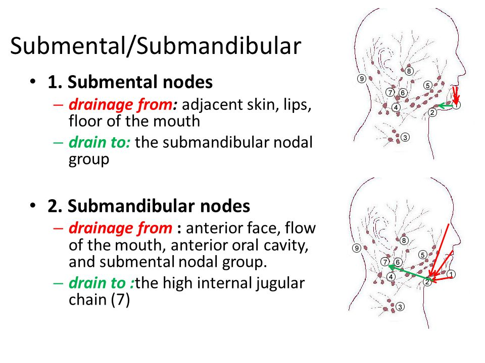 Submental/Submandibular 1. Submental nodes – drainage from: adjacent skin, lips, floor of the mouth – drain to: the submandibular nodal group 2. Subma